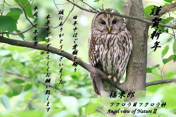 平成29年blog用年賀状フクロウ