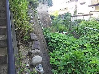 yomiuri4-10.jpg