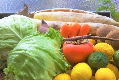 2016 11 野菜