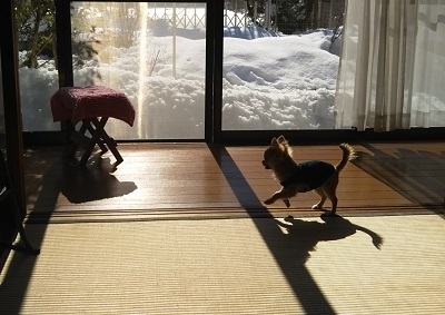 大雪の庭とえん