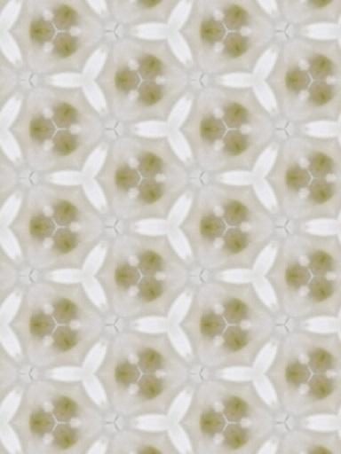 170107_white1.jpg