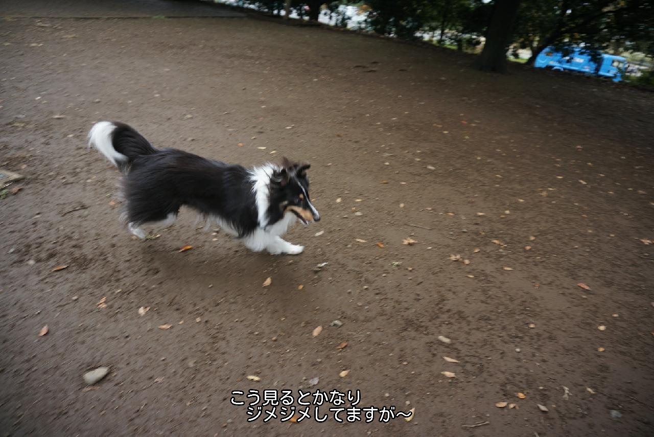 16-10-29-17-27-09-655_deco.jpg