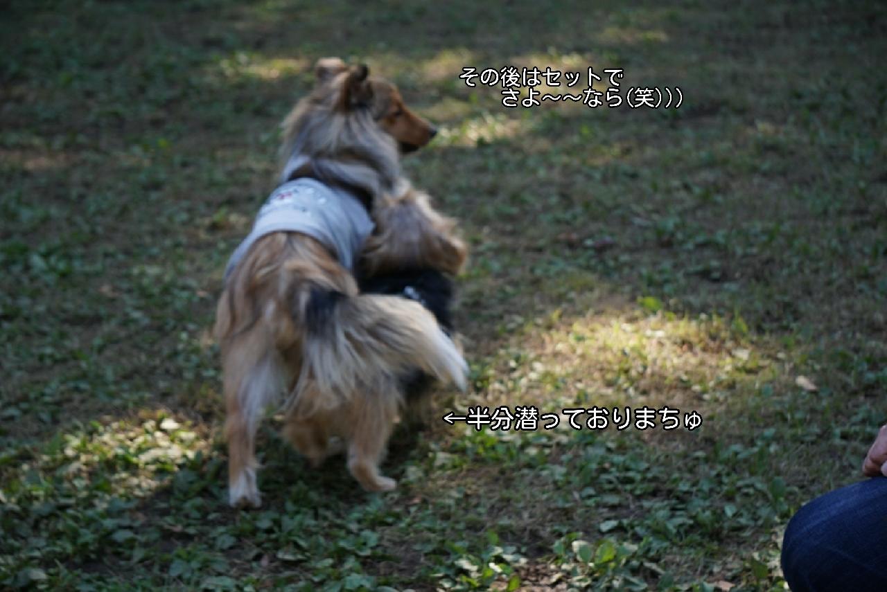 16-11-06-14-07-30-032_deco.jpg