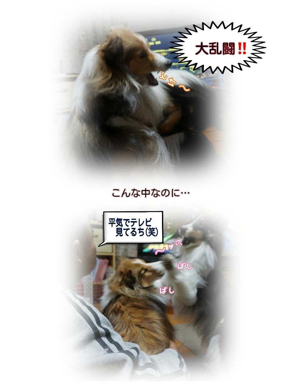 16-11-23-10-24-47-378_deco.jpg