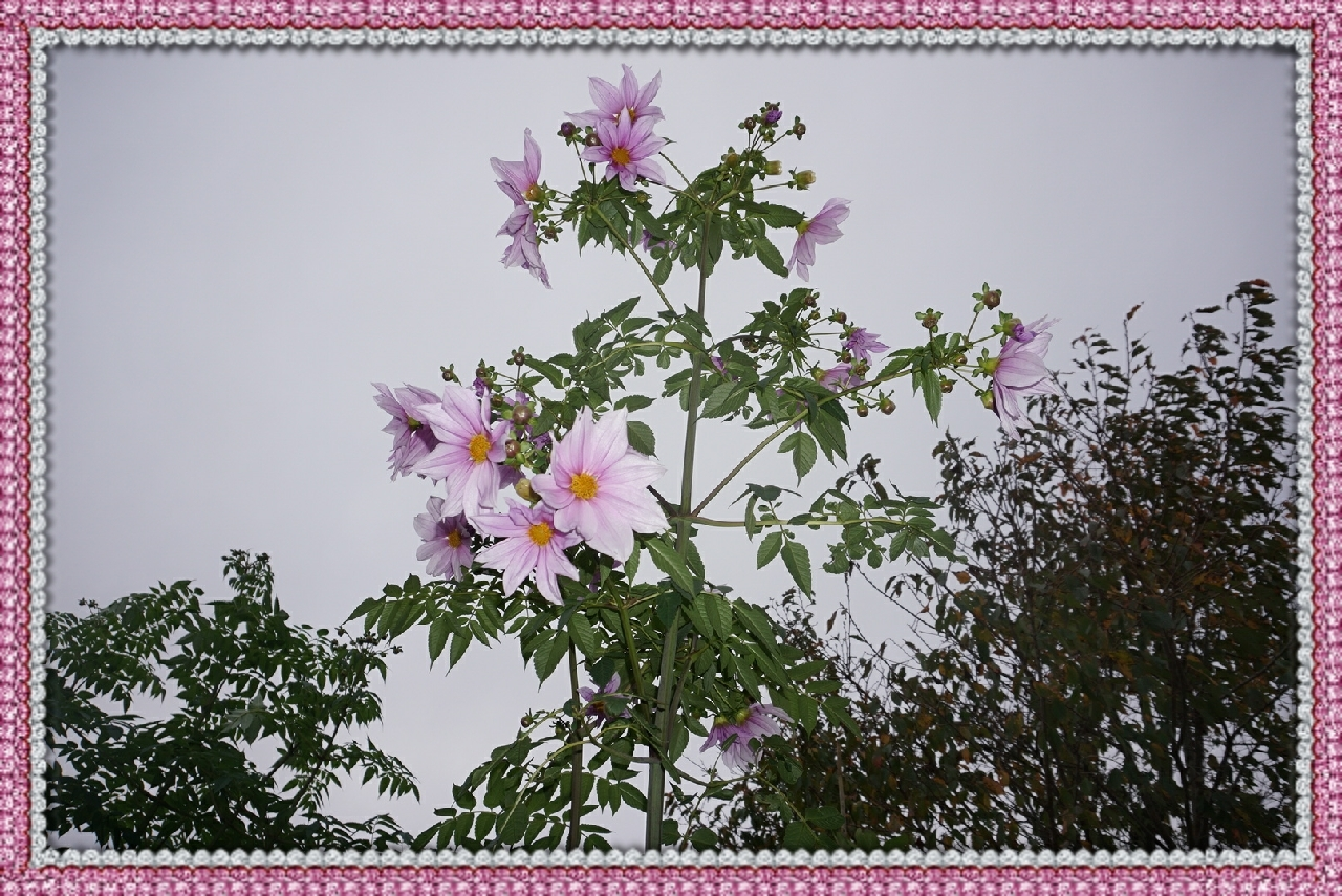 16-11-24-07-05-46-790_deco.jpg