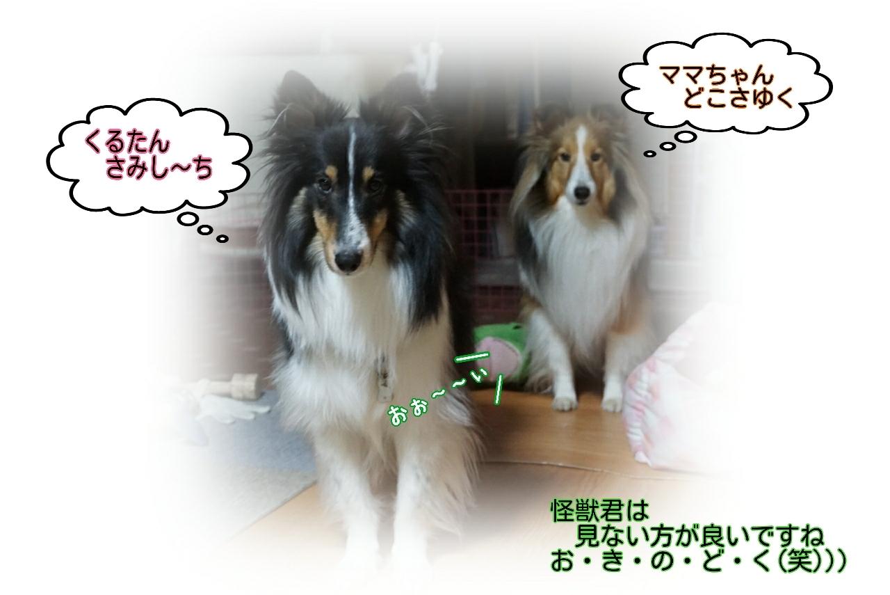17-01-12-10-59-06-788_deco.jpg