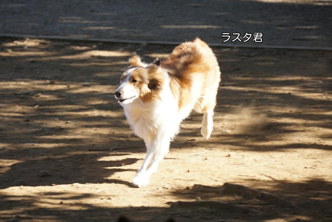 17-02-04-18-06-03-799_deco.jpg