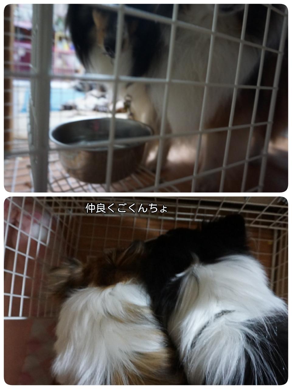 17-02-09-15-09-04-890_deco.jpg