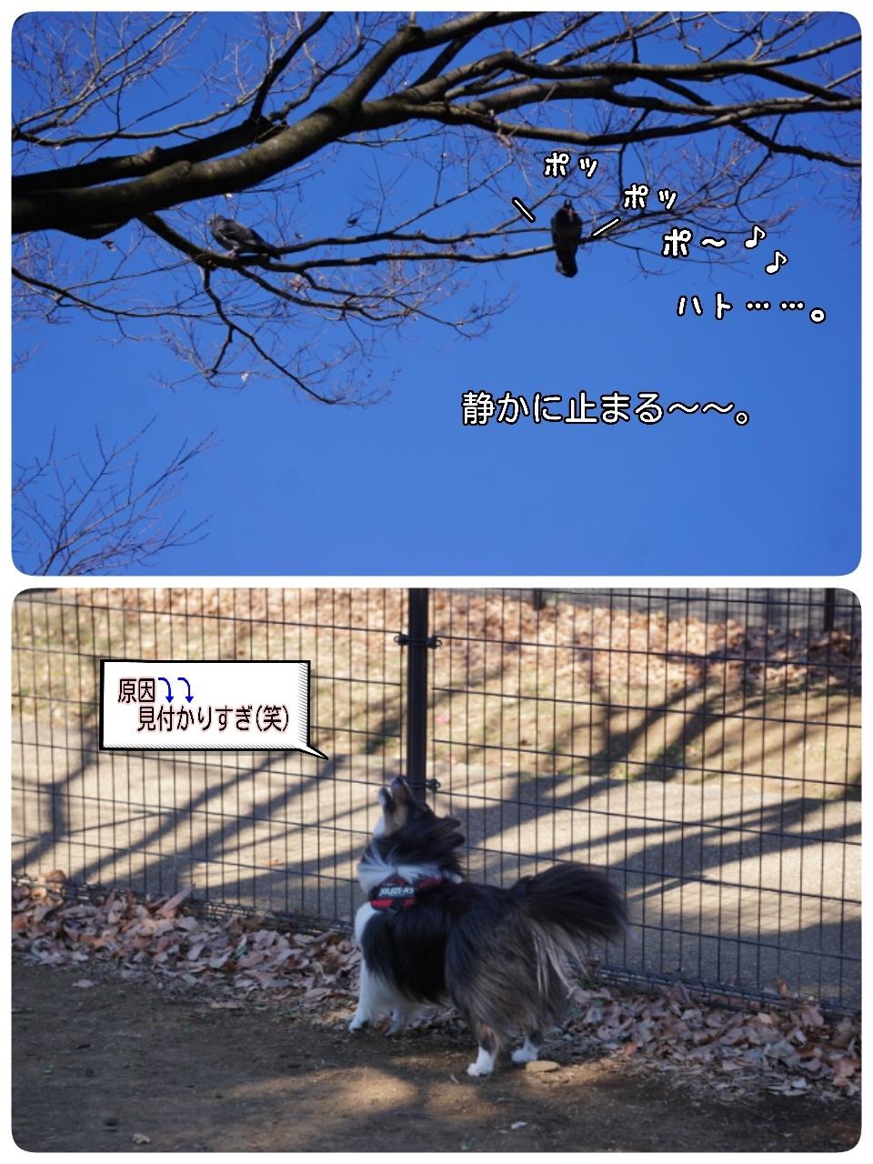 17-02-12-11-01-22-950_deco.jpg