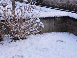 朝は積雪20170121-3