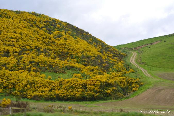 5エニシダの丘