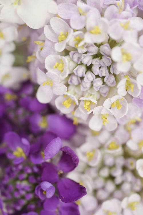 flower_17_2_1_11.jpg
