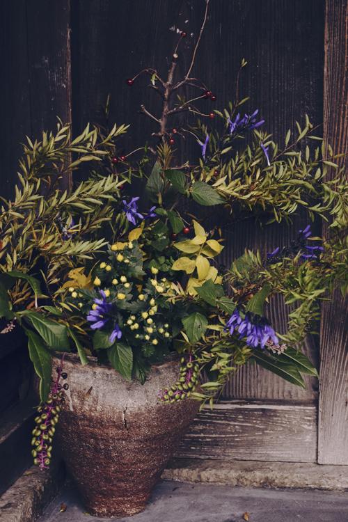flowers_16_11_8_1.jpg