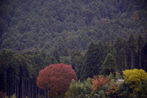 ohara_16_11_15_5.jpg