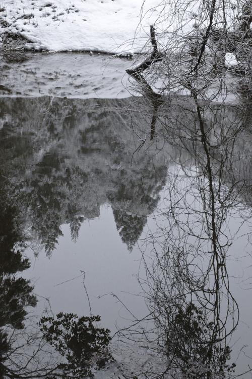 pond_17_2_23_9.jpg