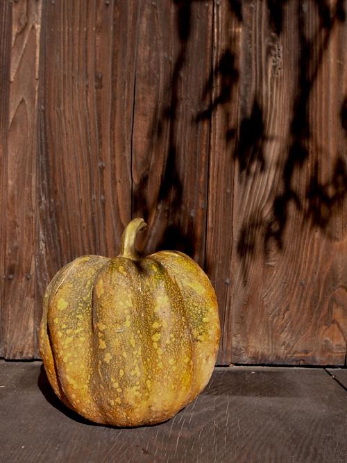 pumpkin16_12_18_1.jpg