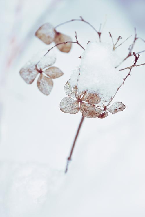 snow_17_1_15_4.jpg