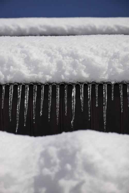 snow_17_1_24_4.jpg