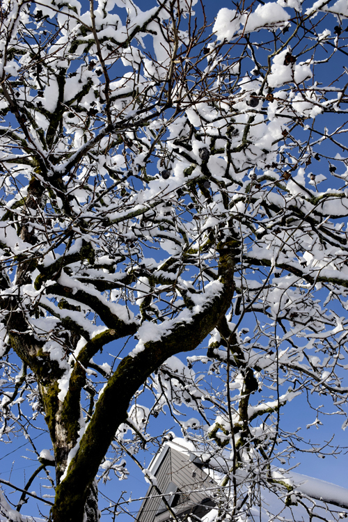 snow_17_1_24_7.jpg