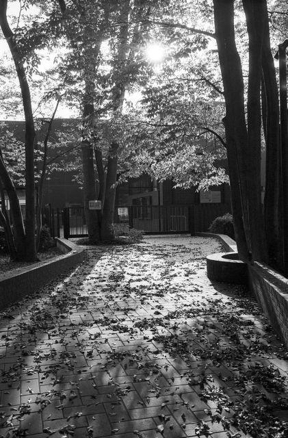 街の秋2016-06a