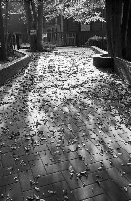 街の秋2016-06cc
