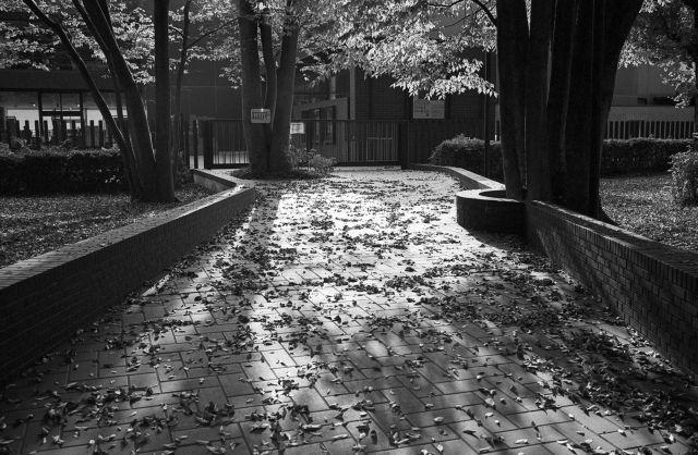 街の秋2016-06b