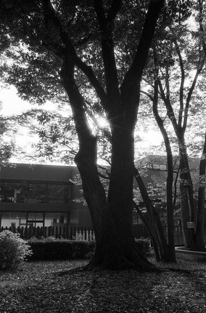 街の秋2016-07a