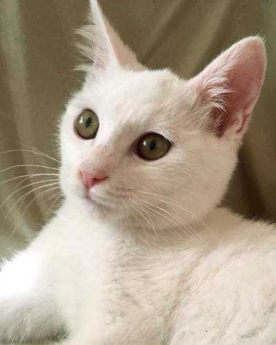 元気いっぱいの白猫ガンモくん(3ヶ月)も参加します