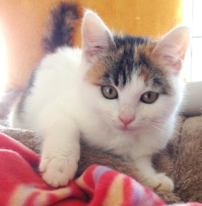 三毛猫ミカちゃん(4ヶ月)参加します