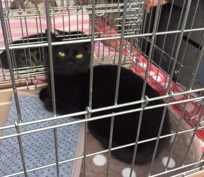 人気の黒猫も参加します