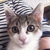 tikuwa_p1_top1.jpg
