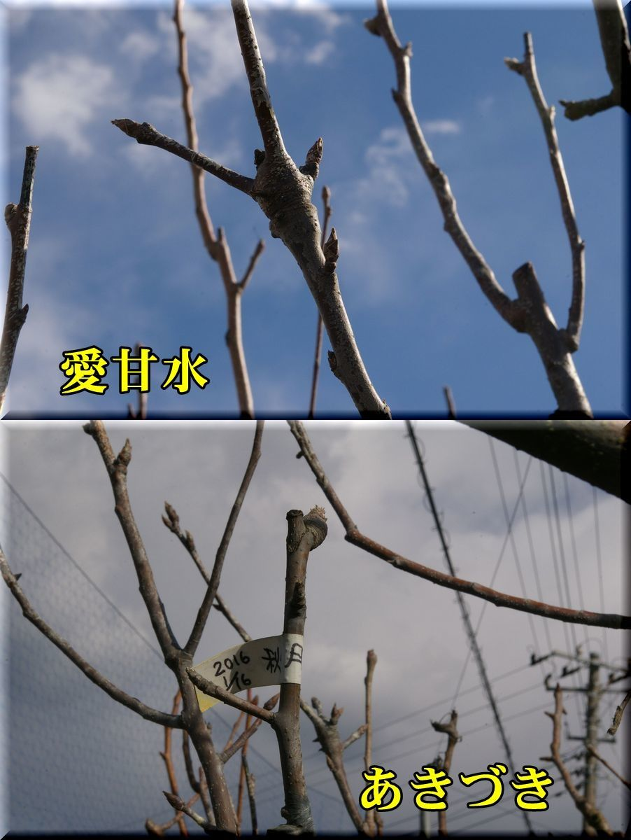 1aika_akidu170123_035.jpg