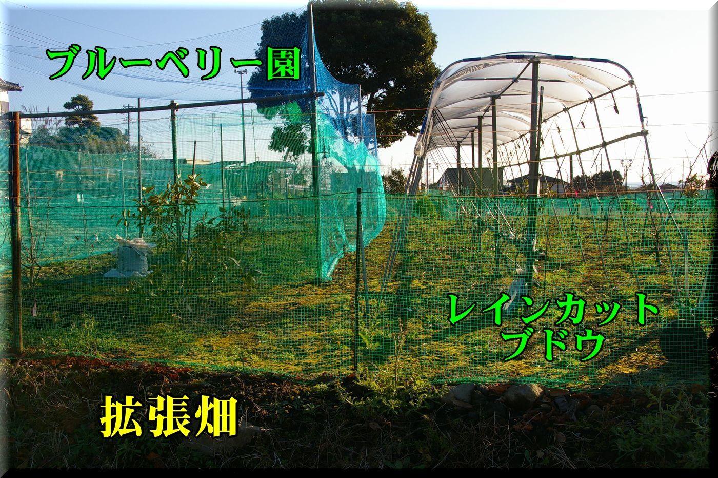 1hatake170110_005.jpg