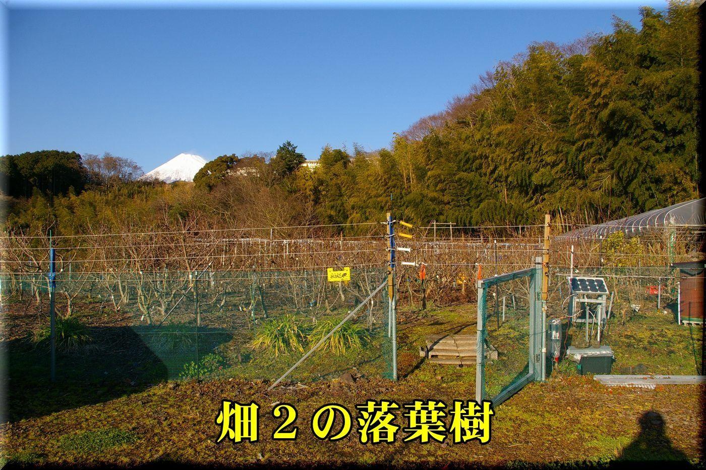 1hatake170110_007.jpg
