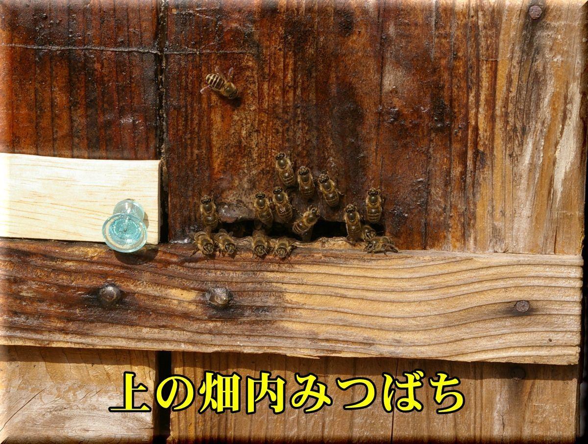 1hati170129_026.jpg