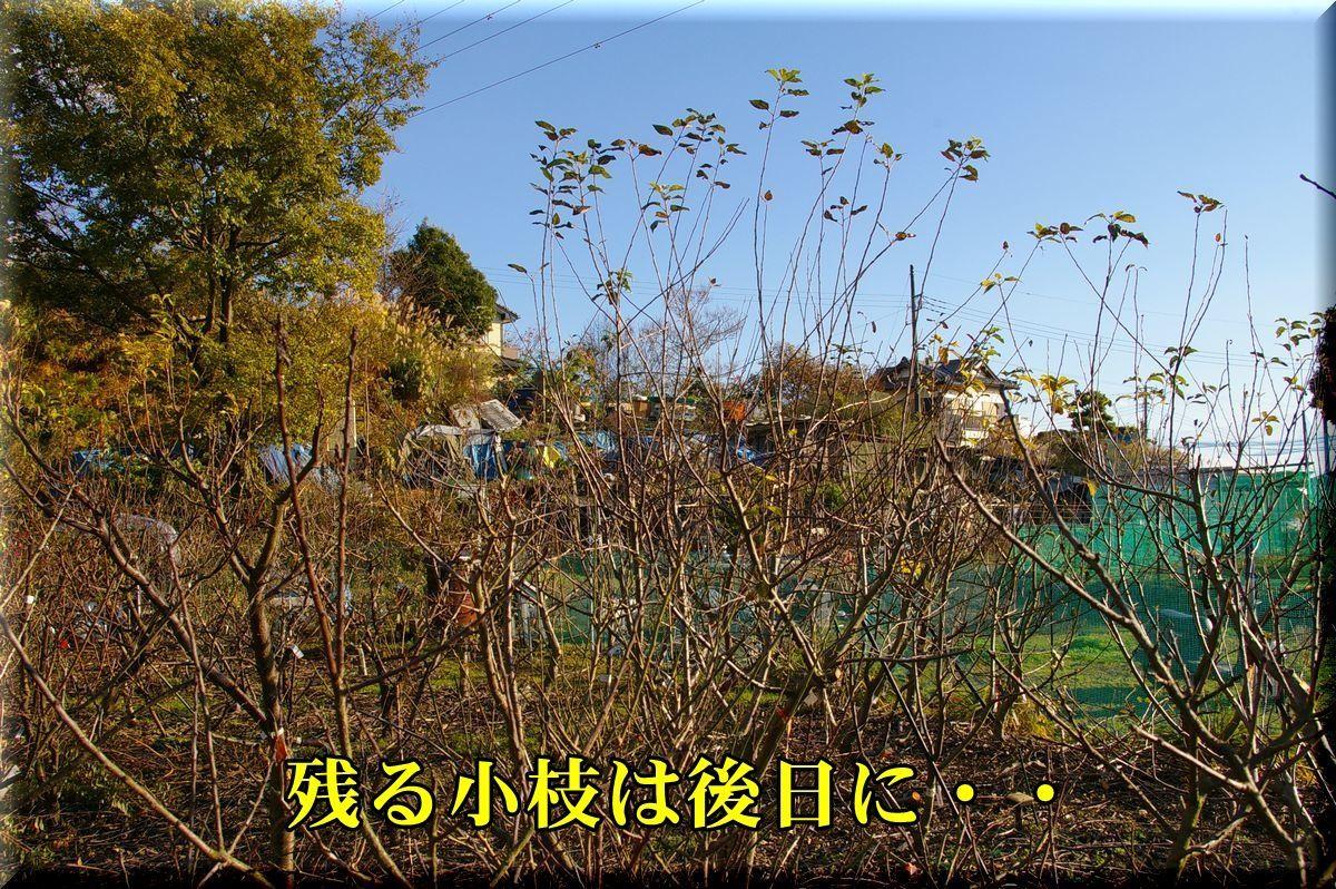 1hatkesecond161210_015.jpg