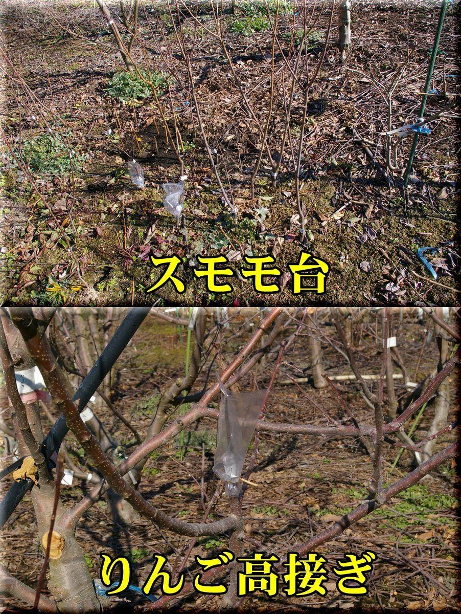 1itu_taka170112_013.jpg