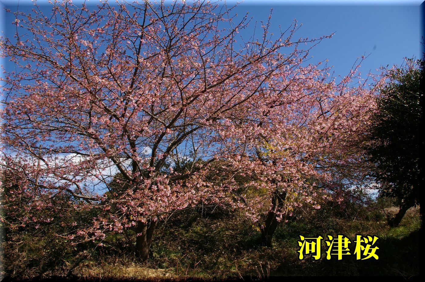 1kawadu170212_006.jpg