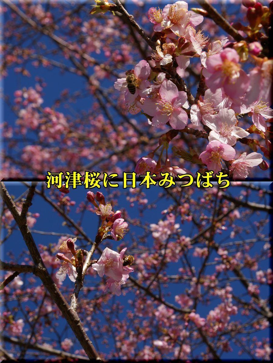 1kawadu170212_011.jpg