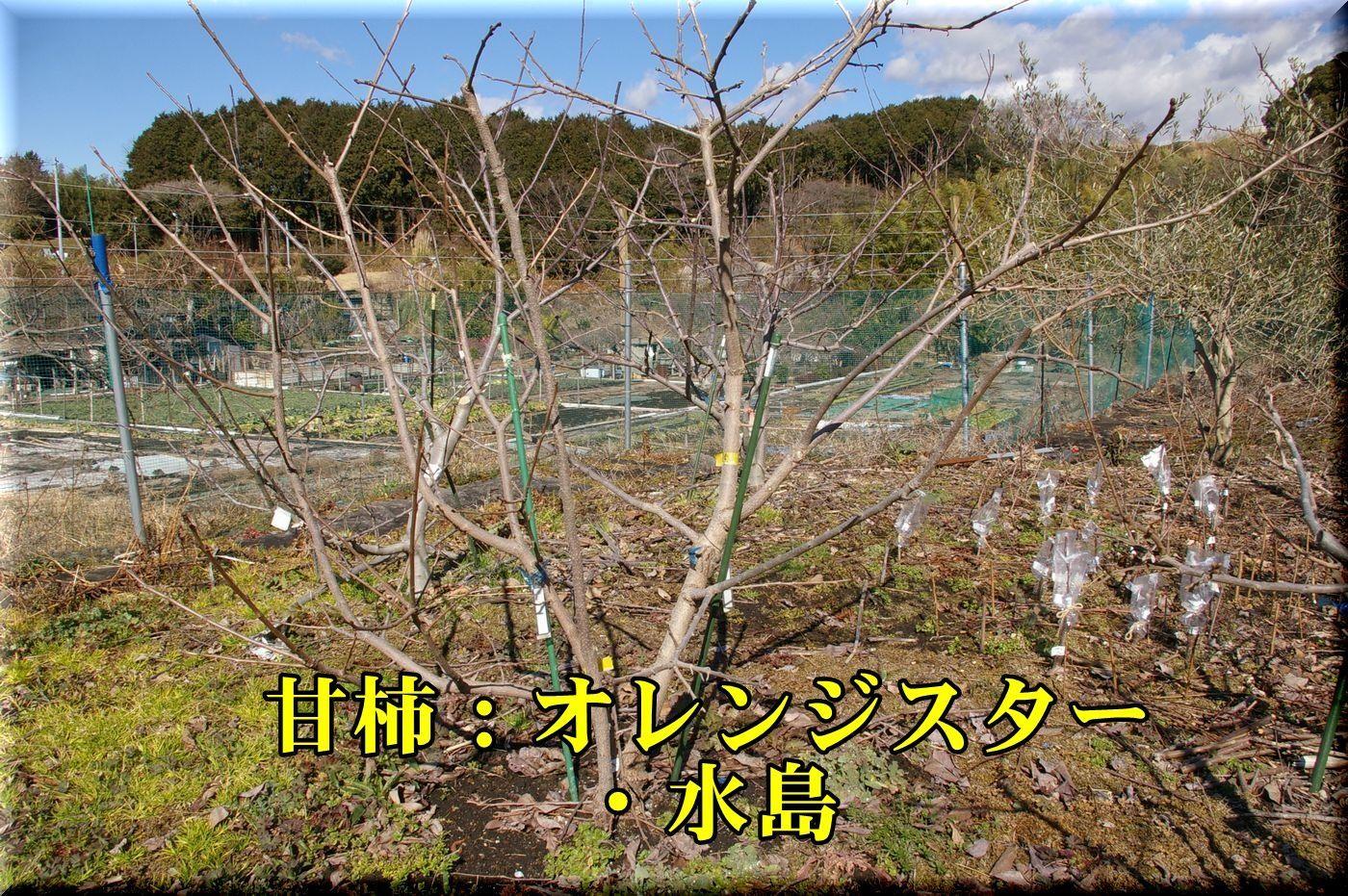 1oren_mizu170206_020.jpg
