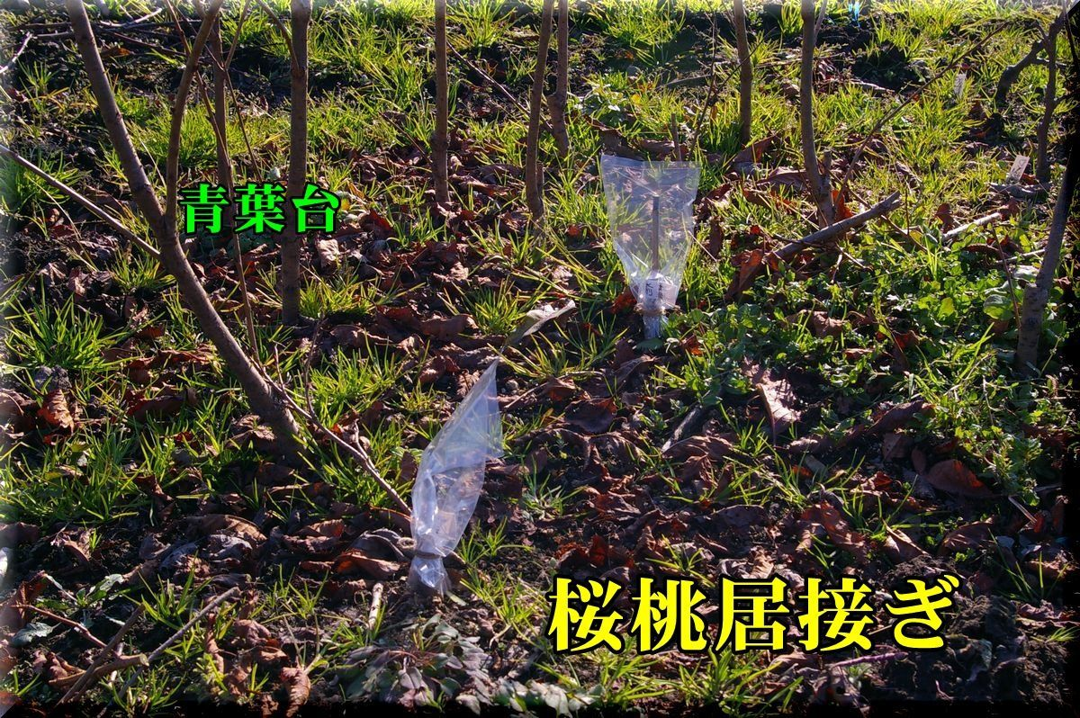 1outouitugi170103_009.jpg