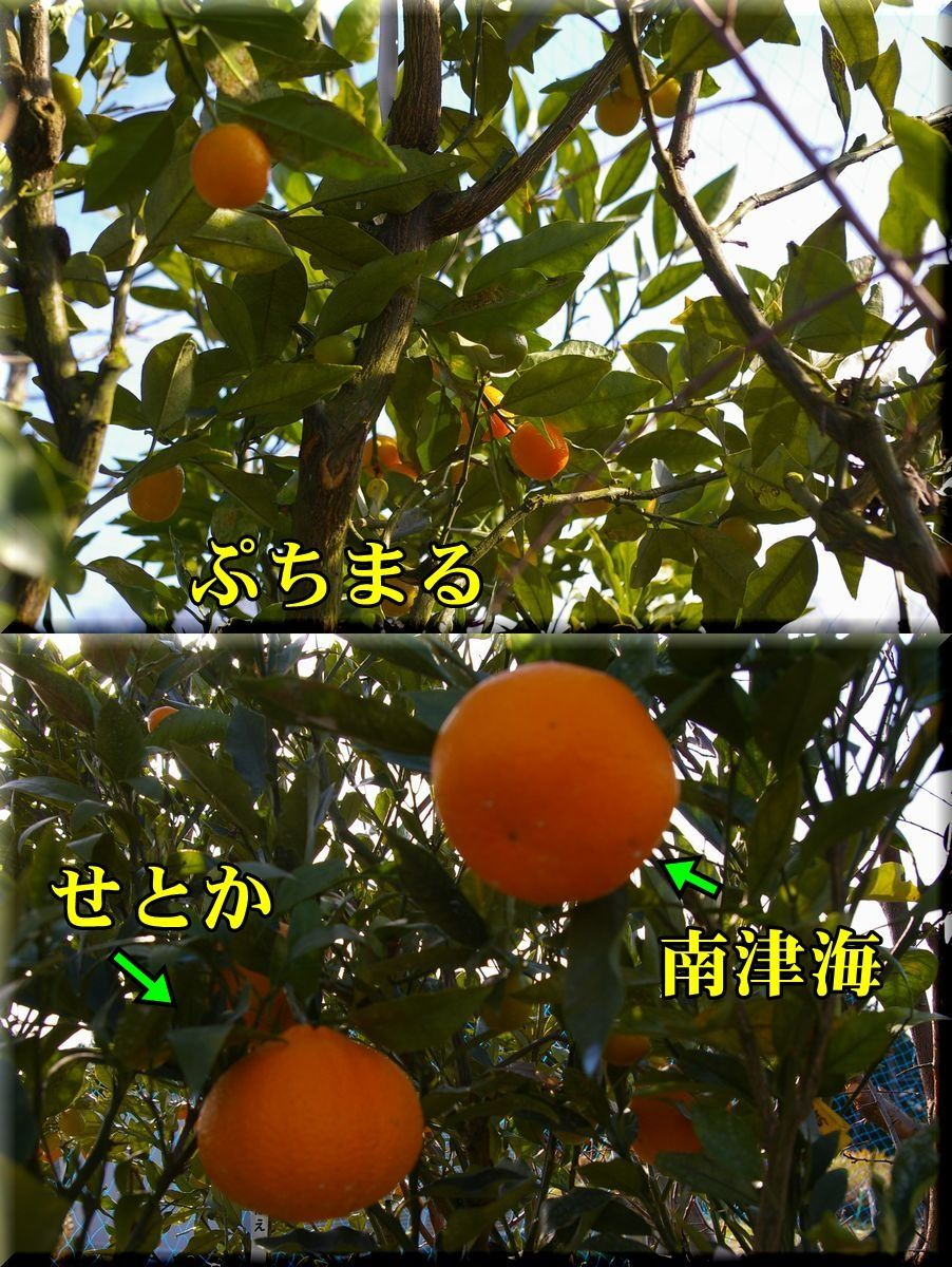 1putimaru161224_014.jpg