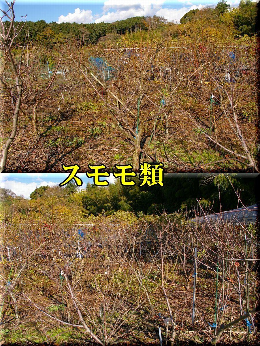 1sumomo161215_003.jpg