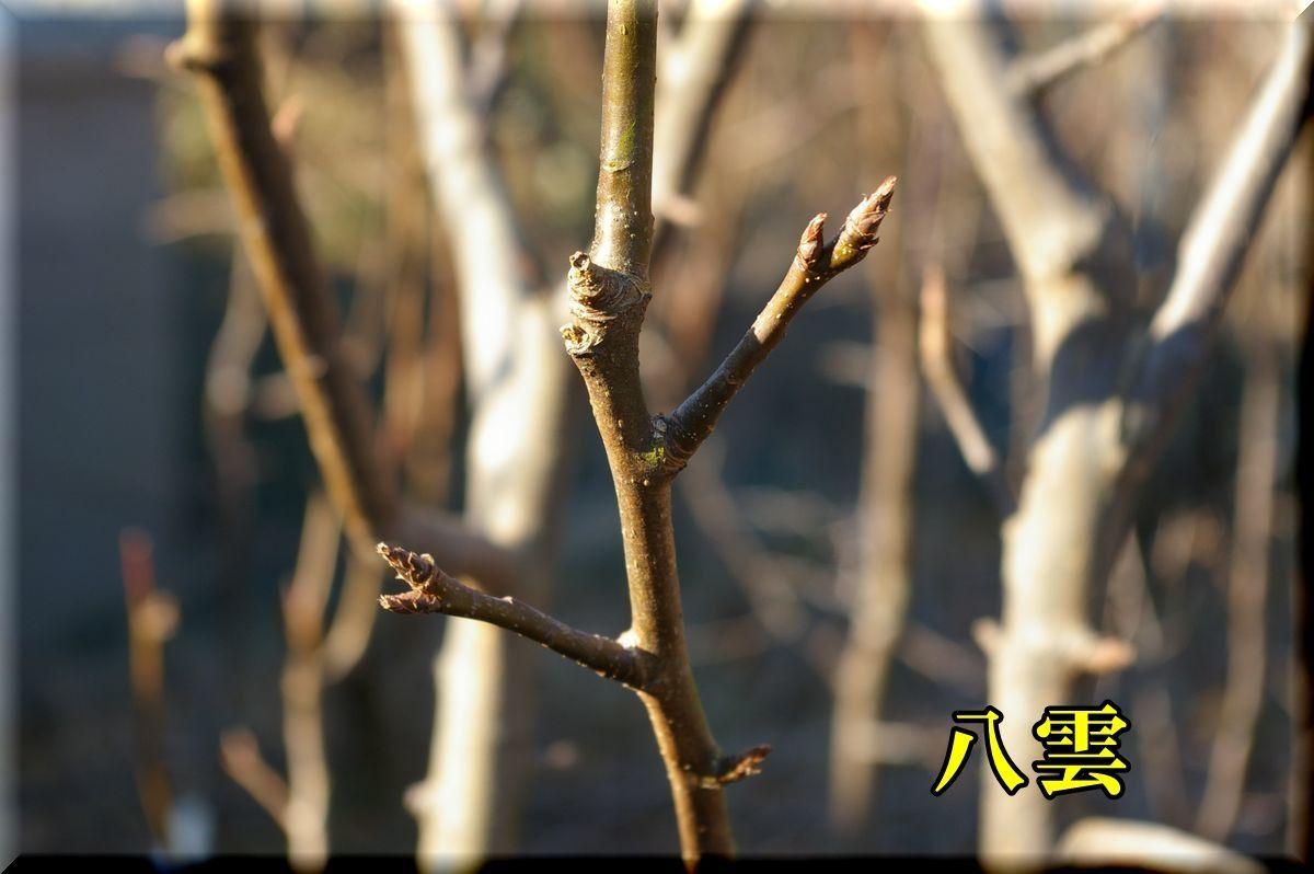 1yakumo170122_009.jpg