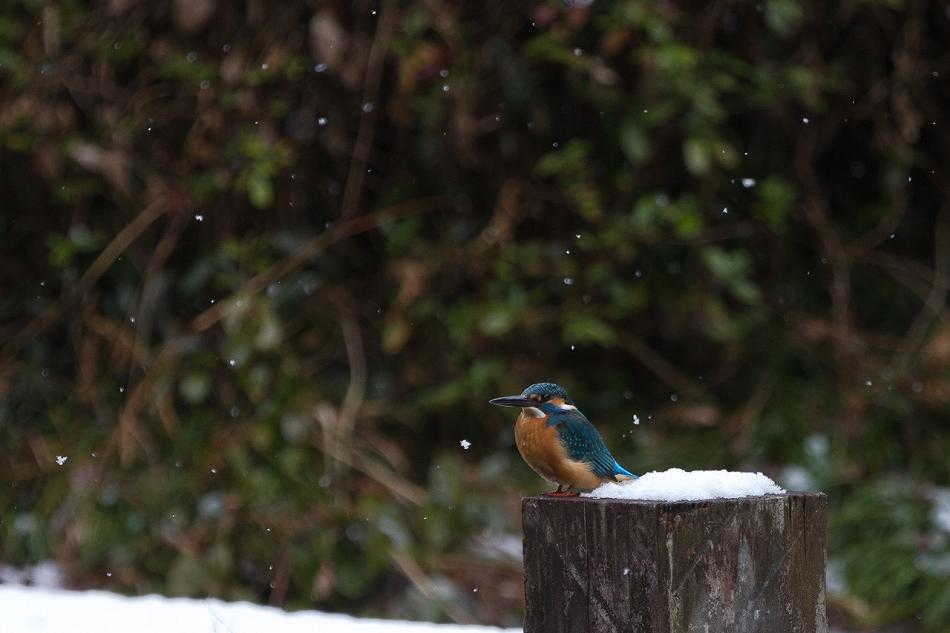 higashiyama_snow-12.jpg