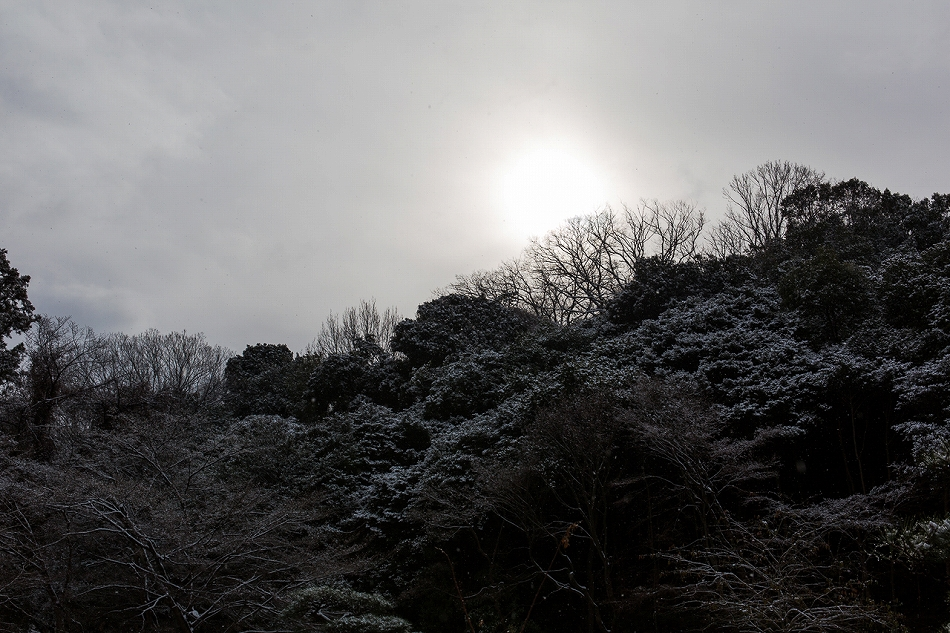 higashiyama_snow-4.jpg