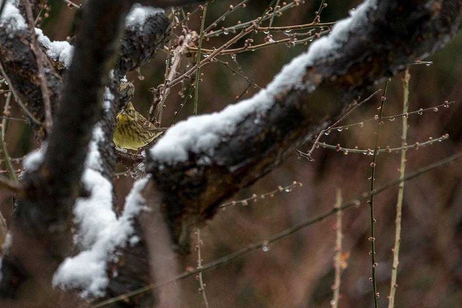 higashiyama_snow-6.jpg