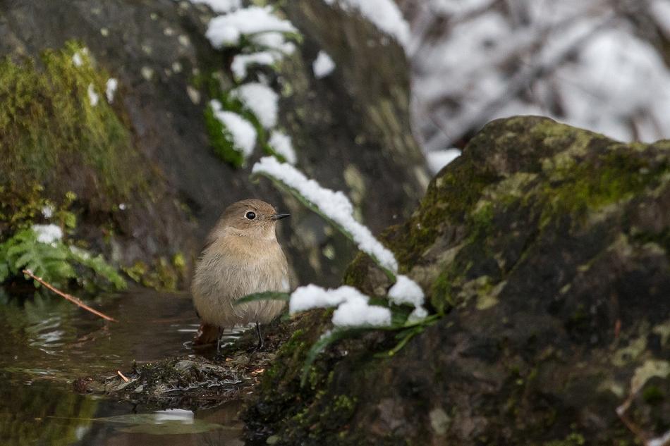 higashiyama_snow2-10.jpg