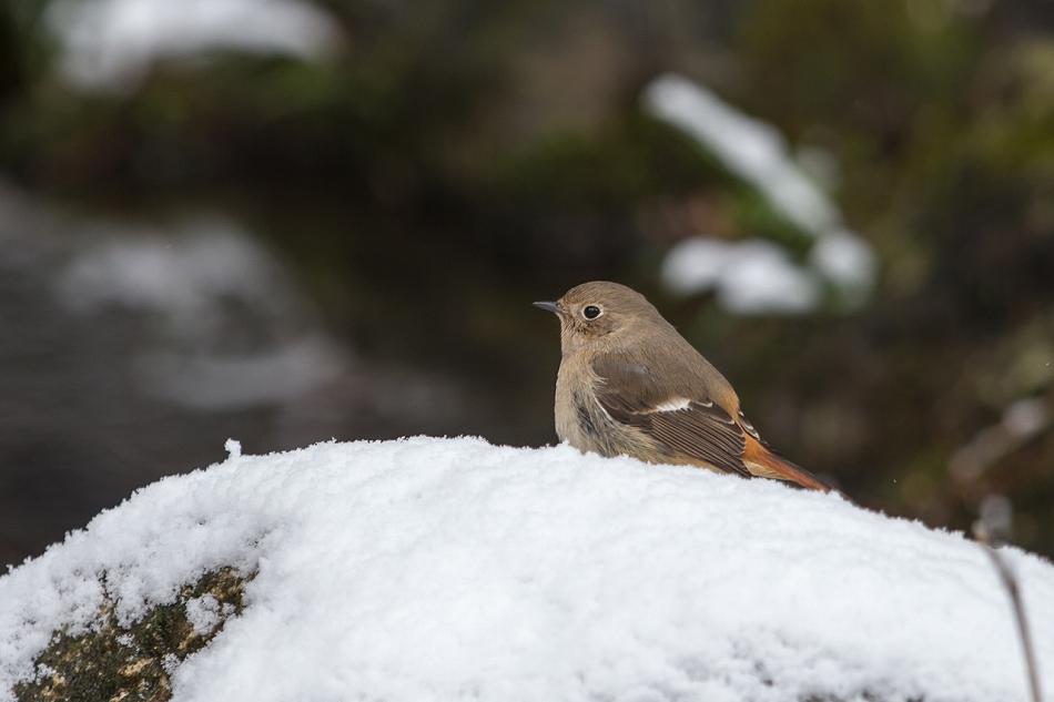 higashiyama_snow2-11.jpg