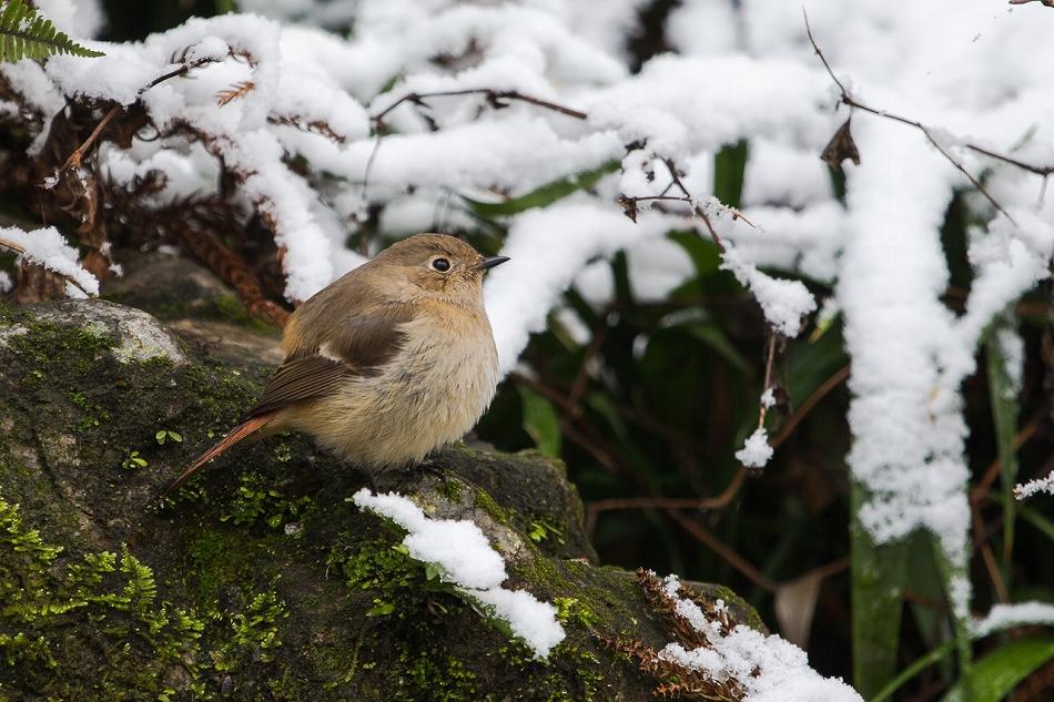 higashiyama_snow2-18.jpg